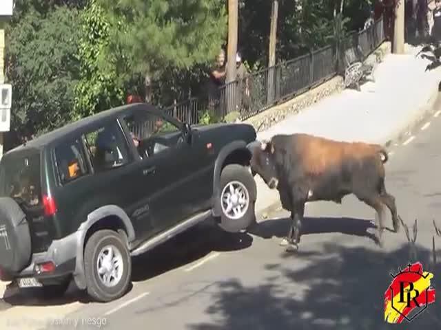 Бык атаковал автомобиль во время традиционного забега быков в Испании