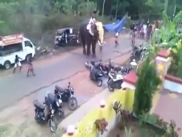 Слон устроил погром во время торжественной церемонии в Пакистане (8.705 MB)