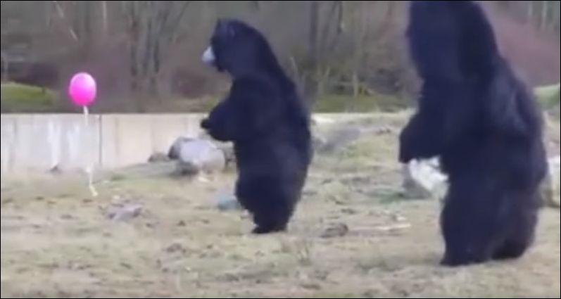 Медведи и воздушный шарик (3.764 MB)