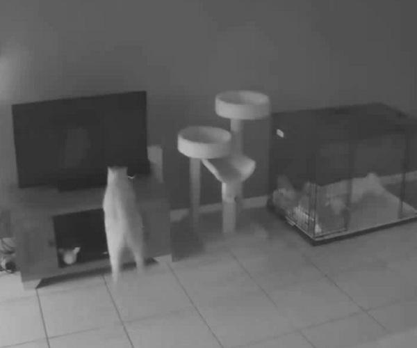 Котэ атакует телевизор (1.744 MB)