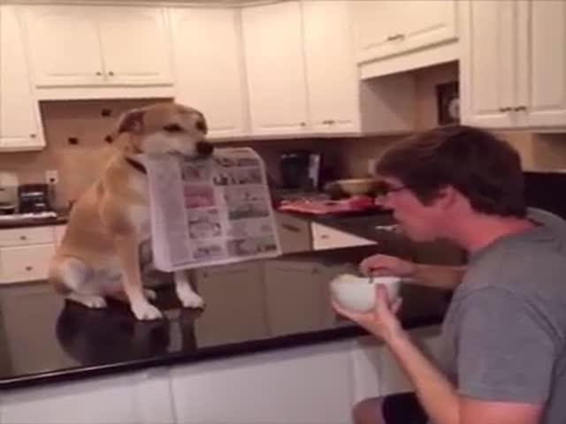 Собака-помогака