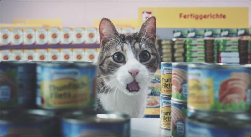 Коты посещают супермаркет (4.499 MB)