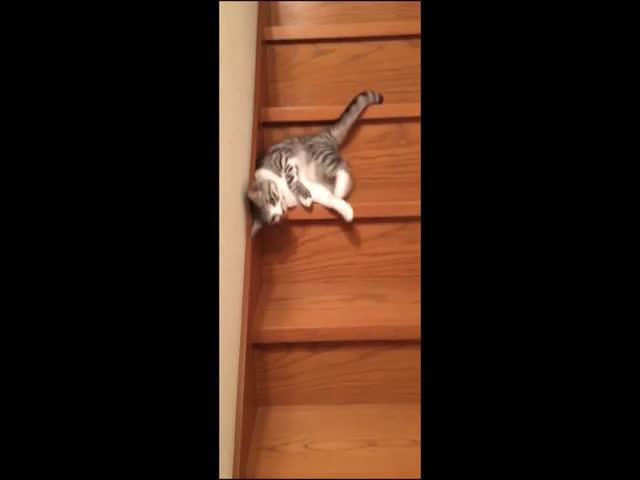Котэ забавно спускается по лестнице (6.737 MB)