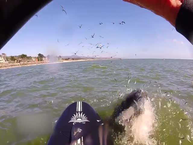 Кит выпрыгнул из воды прямо возле девушки (10.346 MB)