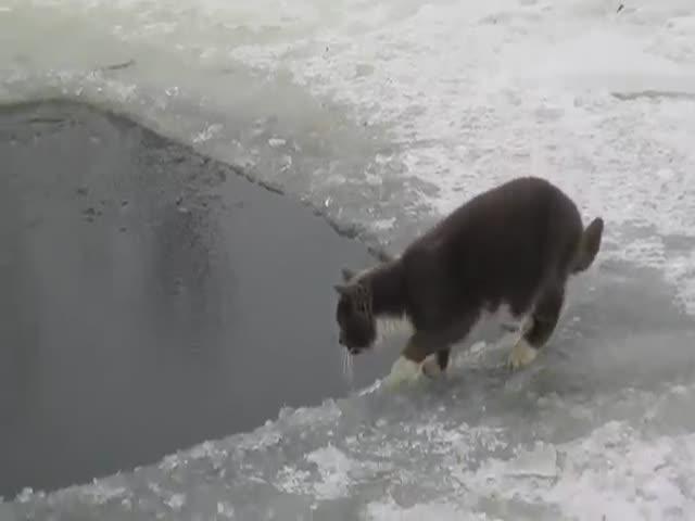 Котэ ловит рыбку в проруби