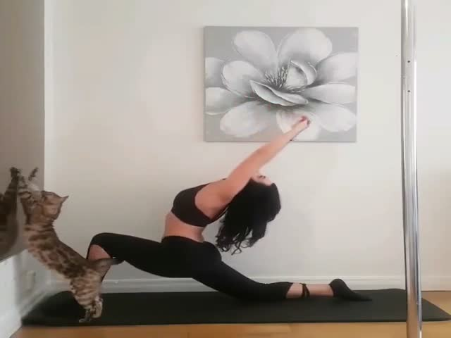 Кот постоянно мешает хозяйке тренироваться