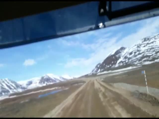 Ворона выпрашивает угощение у водителя грузовика в Казахстане