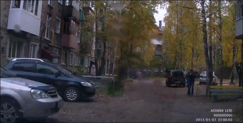 Лось и стая собак гуляют по городу