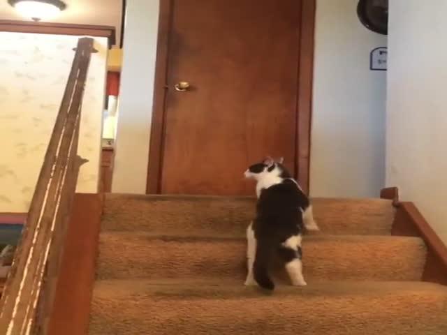 Кот активировал турборежим у собаки