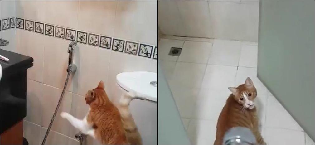 Коту нравится играть с душем