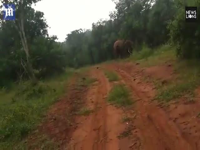 Слон решил прогнать любопытных индийских рабочих