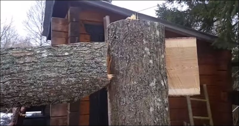 Как заставить дерево упасть в нужном направлении