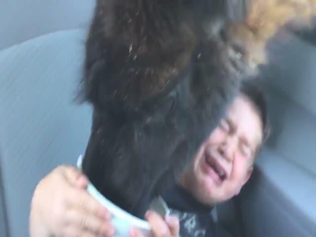 Лама не стала дожидаться корма и сама залезла за ним в машину