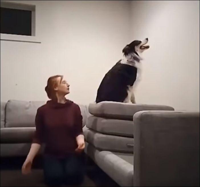 Ну очень умная собака