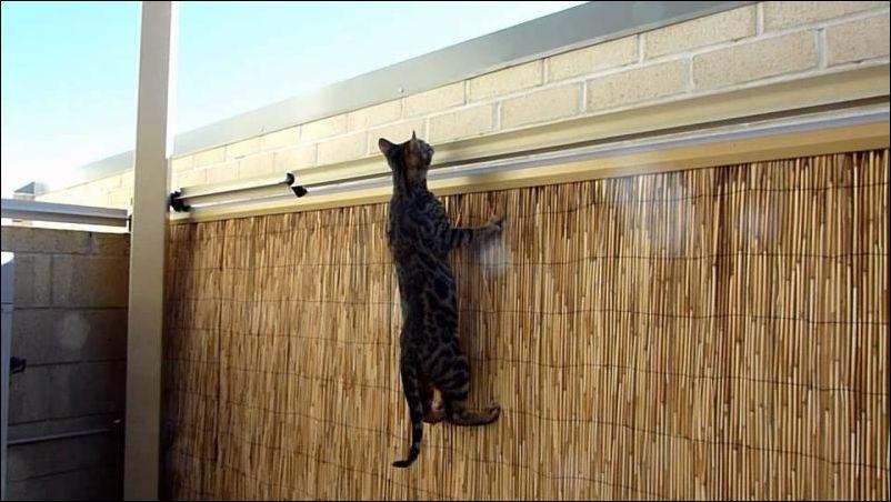 Как помешать кошке сбежать со двора