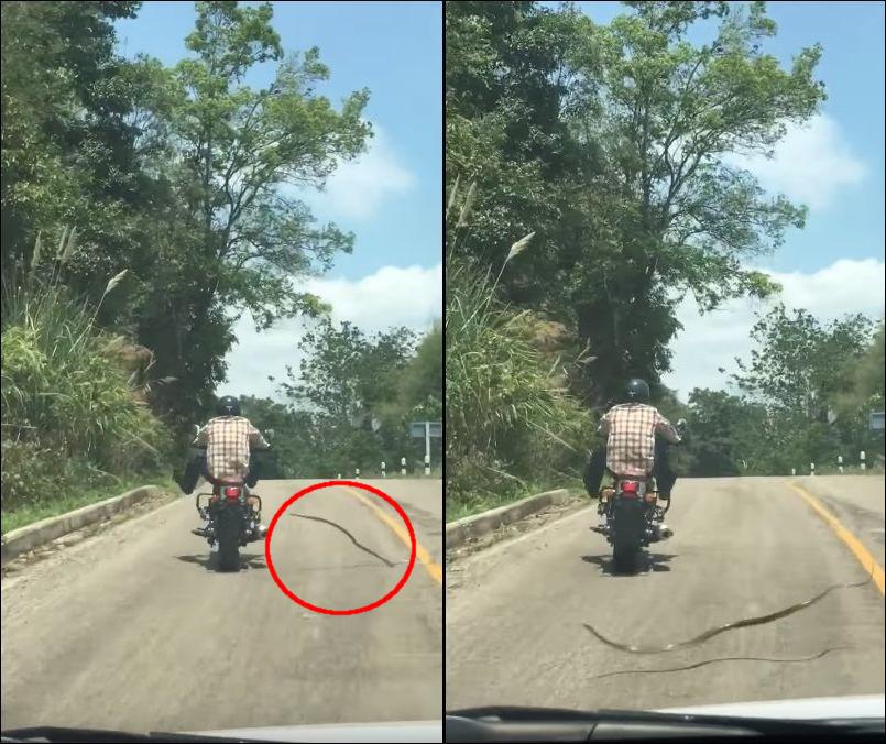 Змея чуть не укусила мотоциклиста в Таиланде