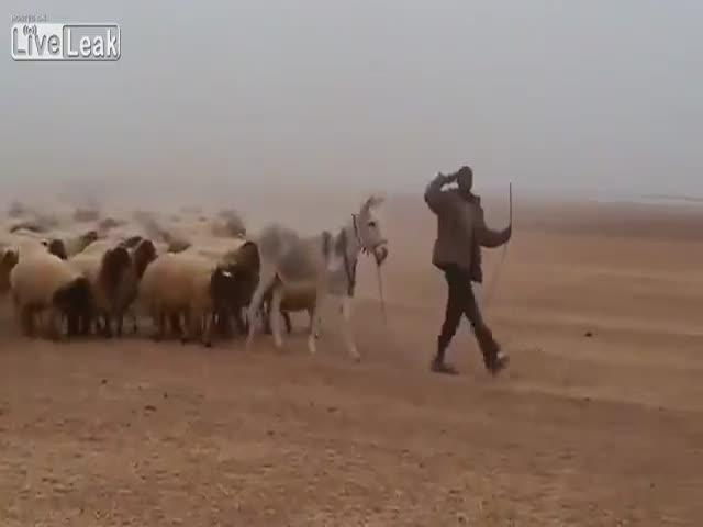 Марш страшной армии где-то в Африке