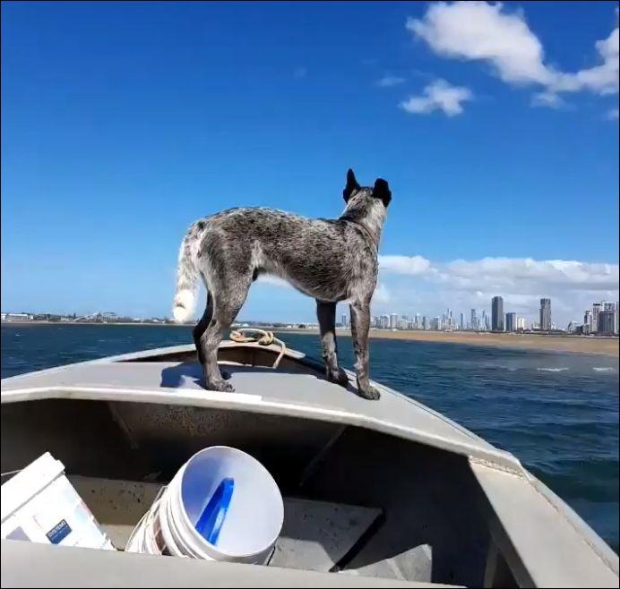 Как быстро выгулять собаку