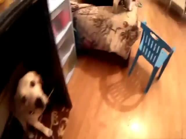 Кот и пес натворили дел, пока хозяев не было дома