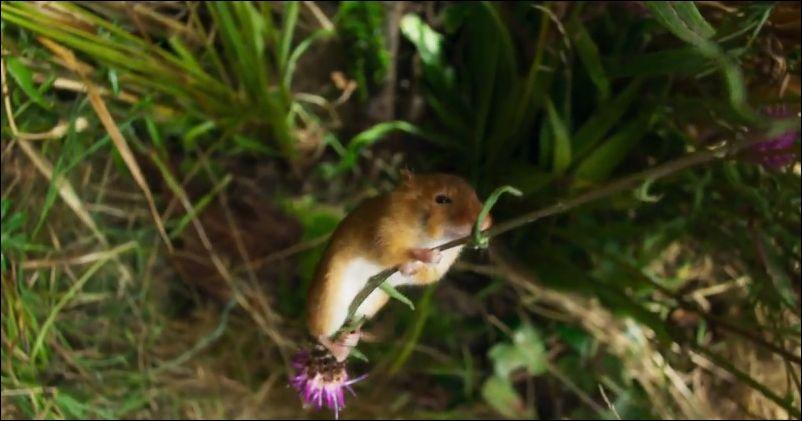 Сова пытается поймать любопытную мышку