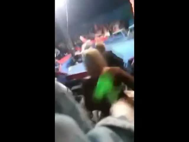В Киевской области цирковой медведь напал на зрителя