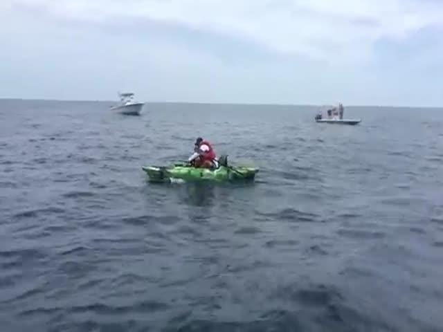 У побережья Флориды рыбак пытается вытащить крупную тупорылую акулу