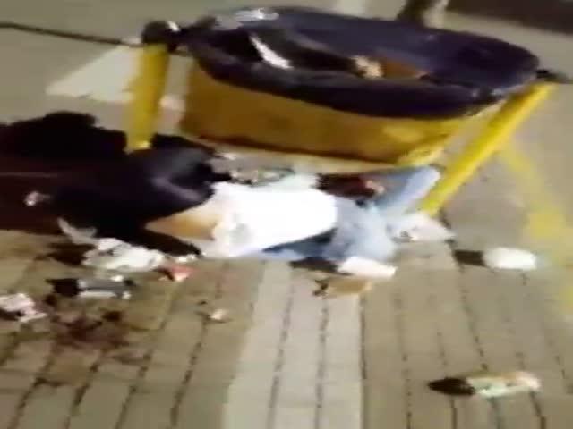 Не очень умная девушка решила посидеть на мусорке