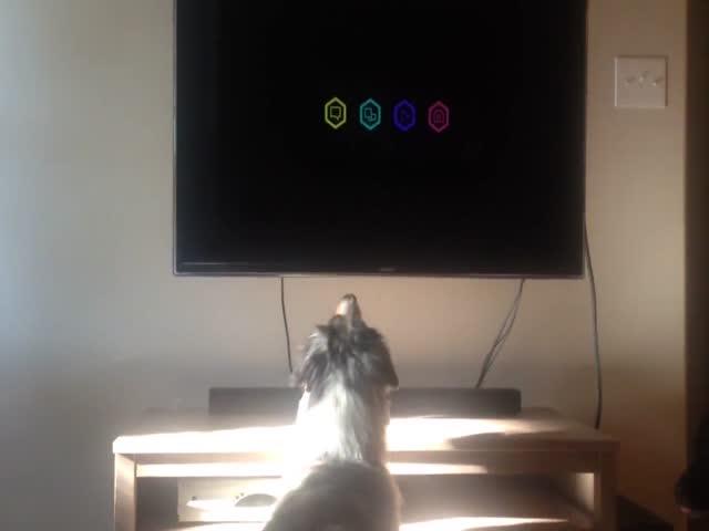 Этот пес обожает смотреть телевизор
