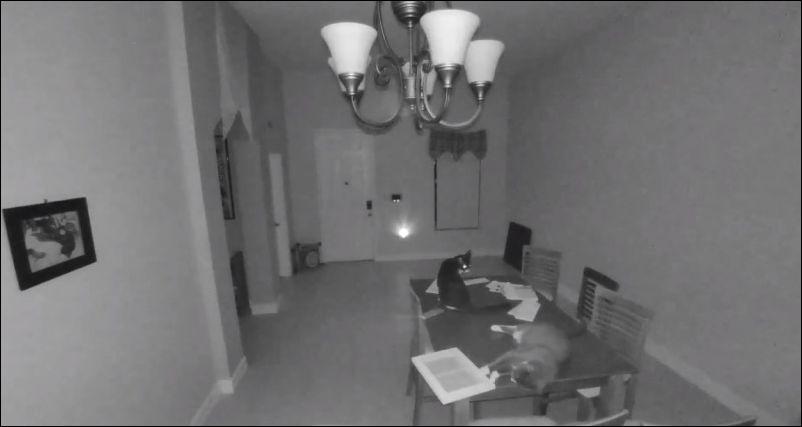 Коты разбили рамку с фотографий и включилась сигнализация