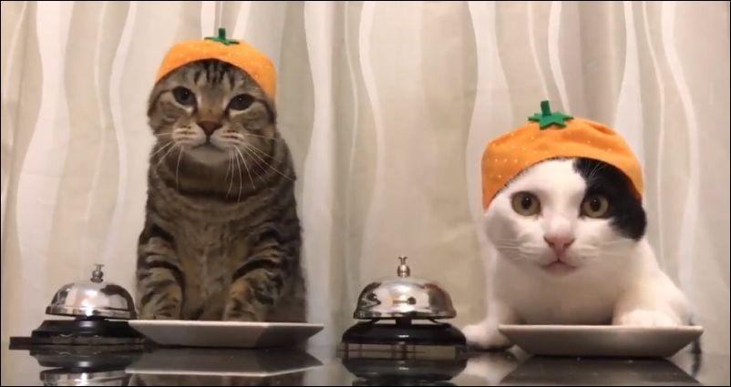 Коты звонят, чтобы получить корм