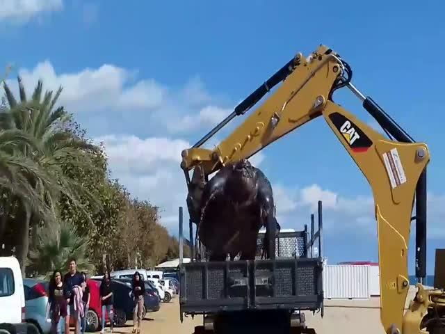 В Испании на берег выбросило 700-килограммовую кожистую черепаху