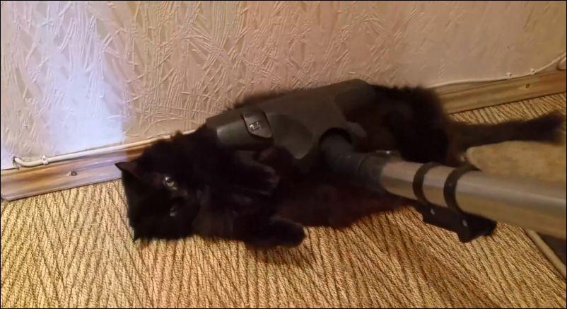 Кот совершенно не обращает внимания на пылесос