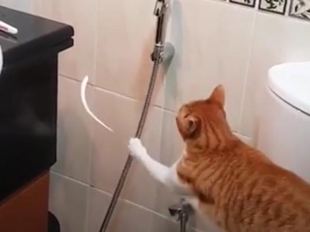 Кот, который обожает играть с водой