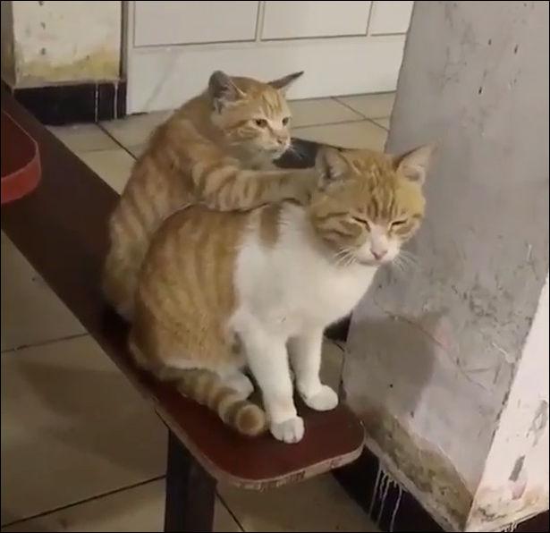 Кот пришел на прием к массажисту
