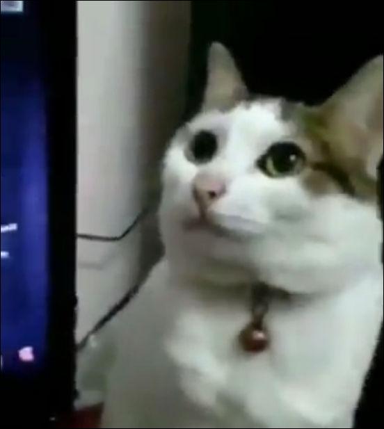 Кот находится в режиме перезагрузки