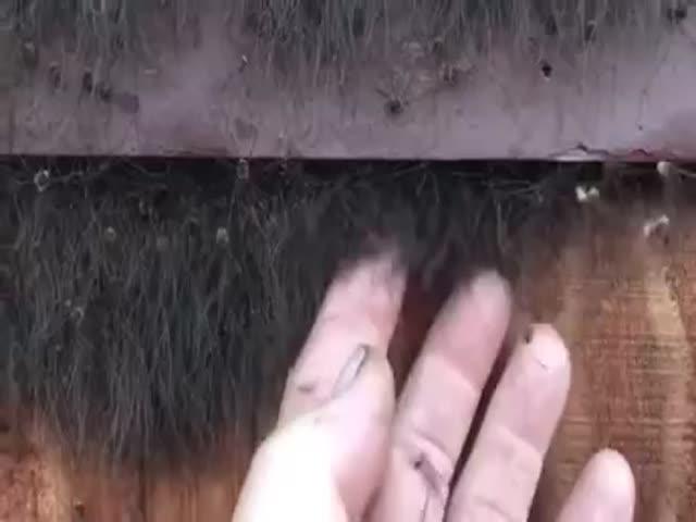 Ад для тех, кто боится пауков
