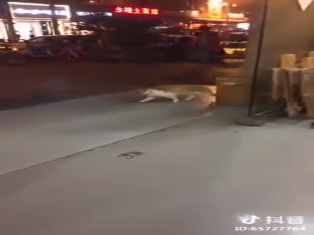 Кот, который гуляет сам по себе