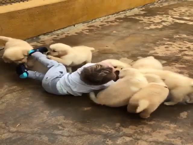 Стая собак пытается загрызть беззащитного ребенка