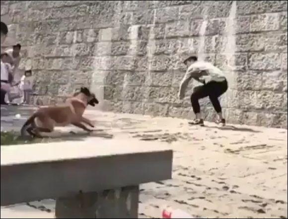 Пес с помощью хозяина забирается на высокую стену