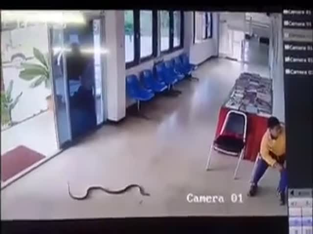 В Таиланде кобра напала на парня со стальными шарами в зале ожидания вокзала
