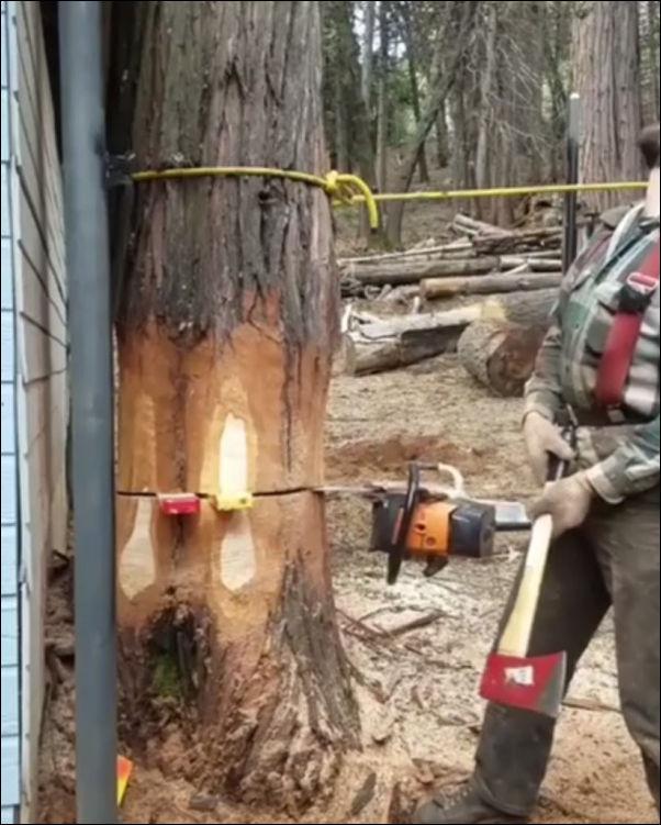 Когда дерево валит настоящий профессионал
