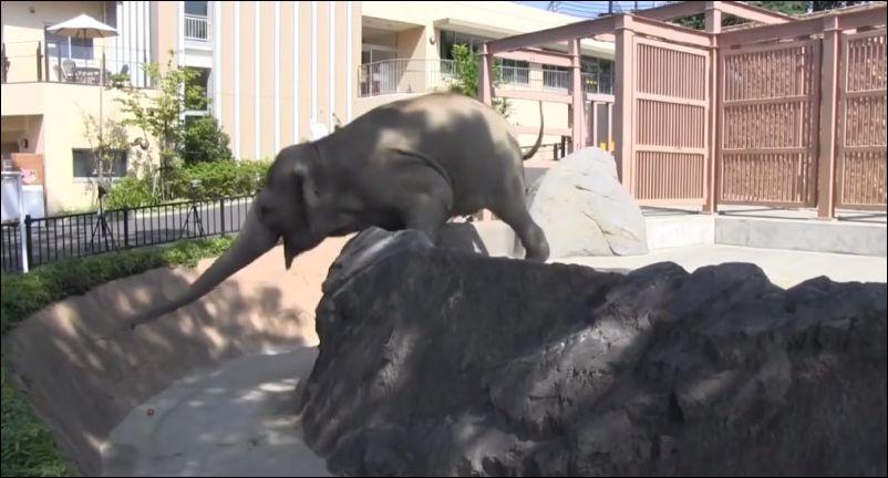 О силе выдыхания слона через хобот