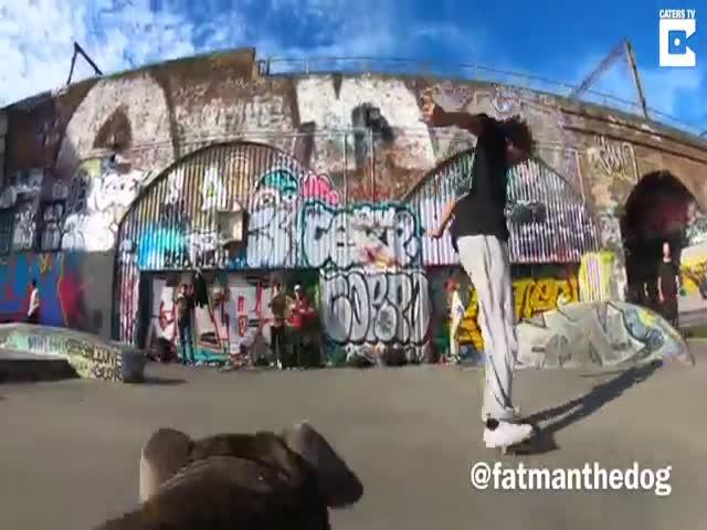 Пес снимает на камеру тренировку лондонских скейтеров