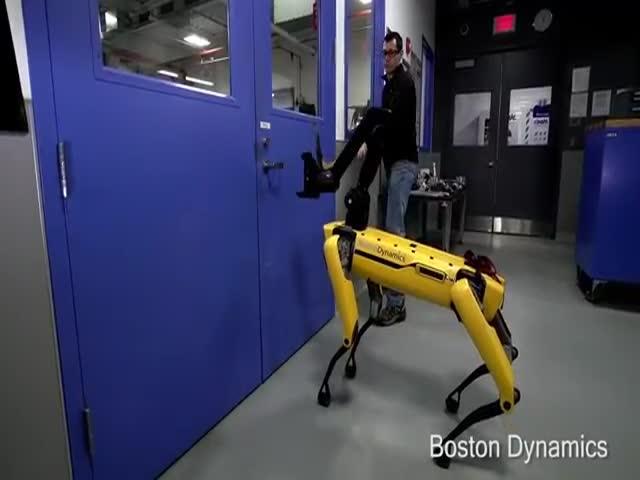 Сотрудник пытается помешать роботу Boston Dynamics открыть дверь