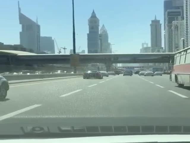 Кого можно встретить на главном шоссе Дубая