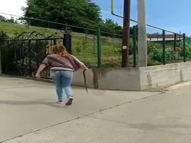 В Сочи девушка поймала змею на дороге и отнесла в безопасное место