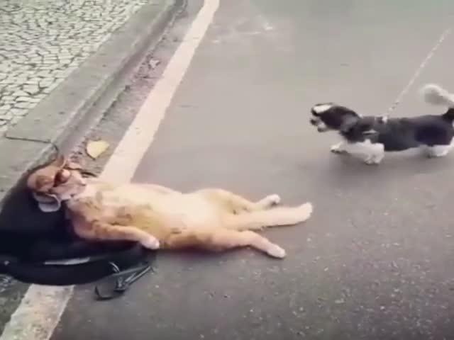 Кот не обращает никакого внимания на маленькую собачку