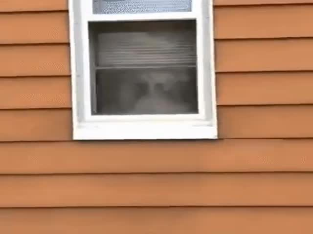 Пес надежно охраняет дом от незваных гостей