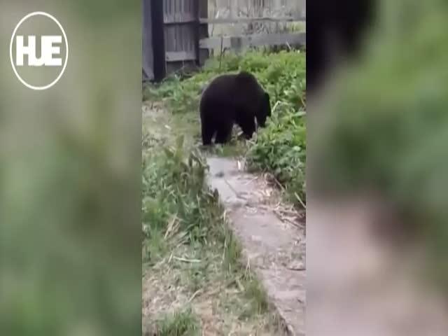 На Сахалине медведь зашел в гости к дачникам, учуяв запах шашлыков