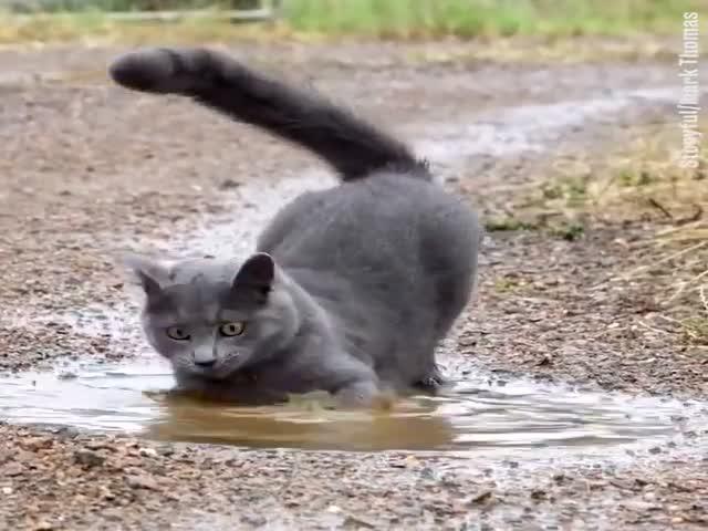 Котэ решил немного искупаться в луже после дождя
